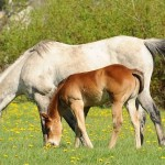 Weaning Colts Part 4; Jill Lane Quarter Horses