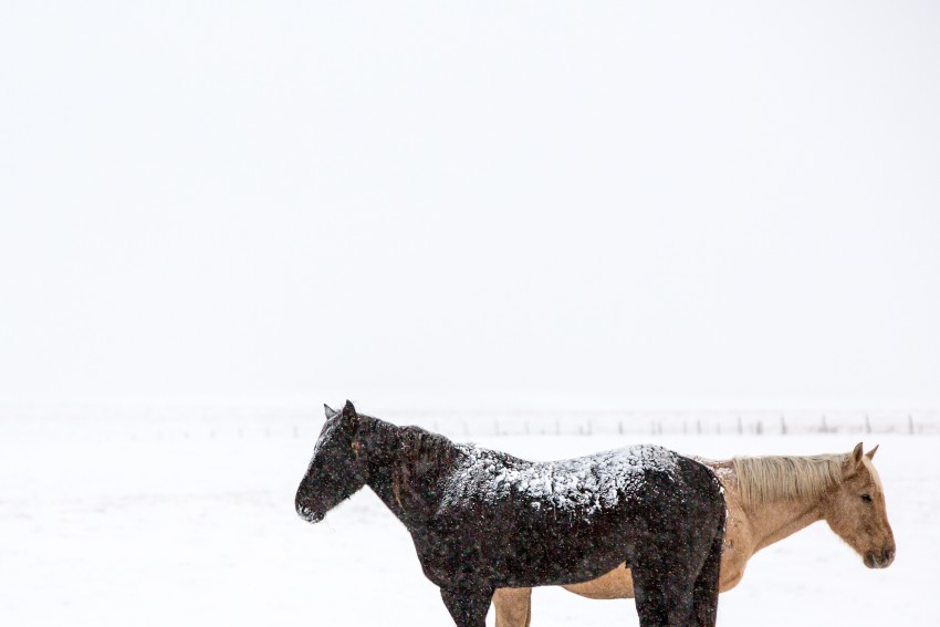 south dakota cowgirl photography, equine photography, equines, snow, winter