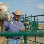 How to Halter Your Horse
