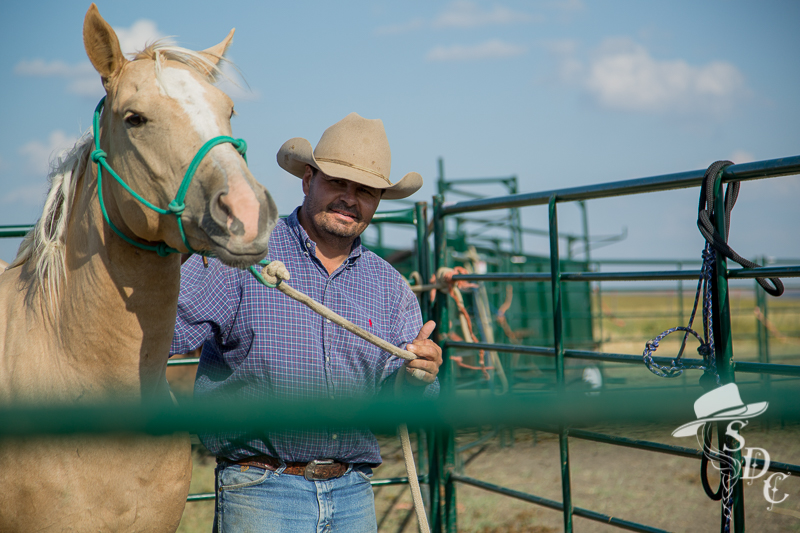 how to halter your horse, haltering your horse, horsemanship, the south dakota cowgirl,