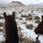 How to Condition Your Horse in the Winter