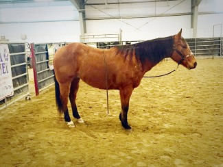featured horse for sale