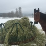 Winter Water for Horses