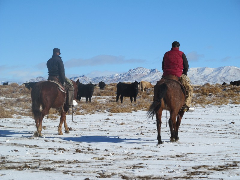 Cowboys in snow, buckaroo lingo,  buckaroo