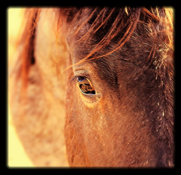 The best self reflection is that which is found by staring into a horse's eye.