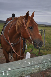 A working horse