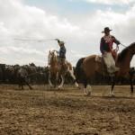 Cowboy Chiggers