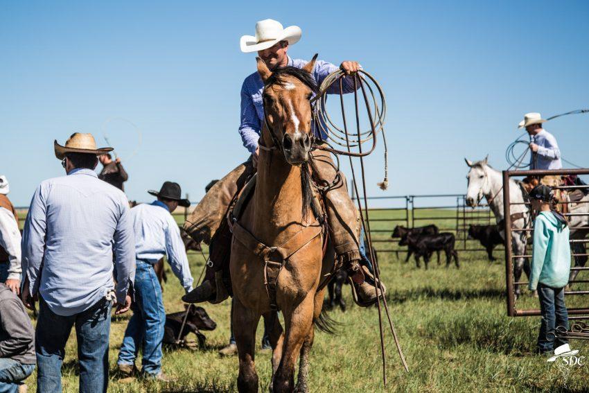 calf branding, dragging a calf to the fire, western, cowboy, ranching, ranch life