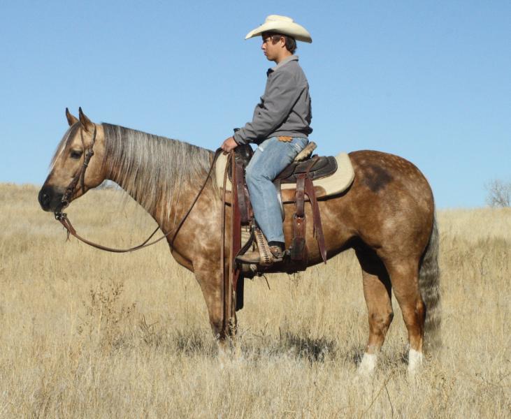 Full House Horse Sale - June 18
