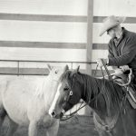 Halter-Breaking While Mounted; Part 2