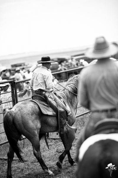 resetting your horse in the sorting pen is important. Branding
