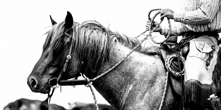 Kind hands make good horses. Branding