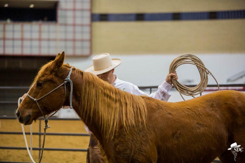 buck brannaman, colt starting, a legacy of legends, first ride