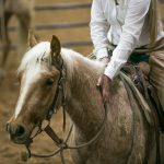 buck brannaman, colt starting, a legacy of legends, first ride, reata brannaman