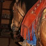How to Soften a Horse's Mind with Tom Wagoner