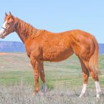 Featured Horse For Sale; 2015 Sorrel Filly