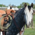 Featured Horse Event: Double J Horse Sale
