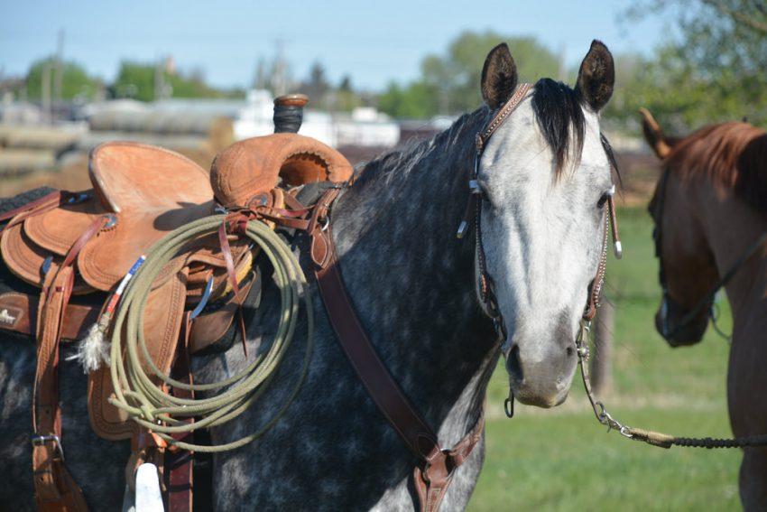 Double J Horse Sales