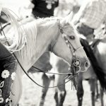 Wyo Wild Ride Ranch Rodeo and Horse Sale Recap