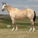 Featured Horse: Myers Performance Horses