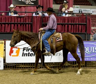 2015 Top Selling Performance Horse