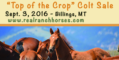 Top of the Crop Colt Sale