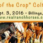 Featured Event: Top of the Crop Colt Sale