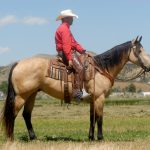 Featured Horse: Wyoming Quarter Horse Ranch