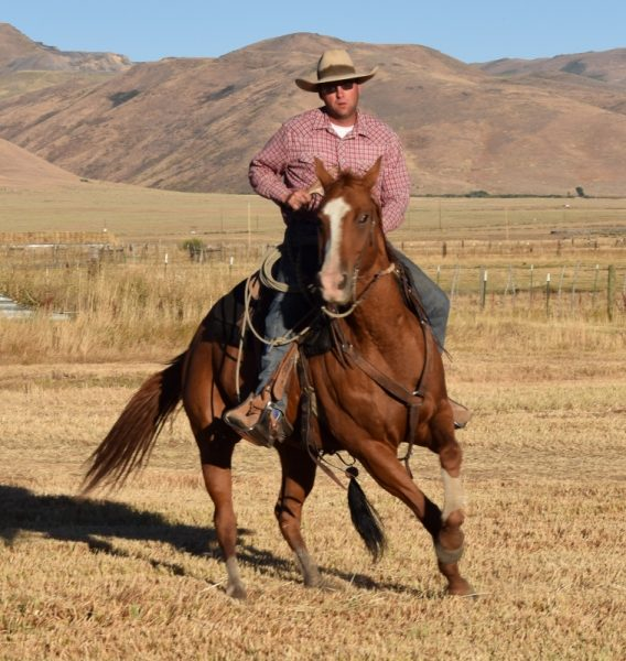 Horse turnaround