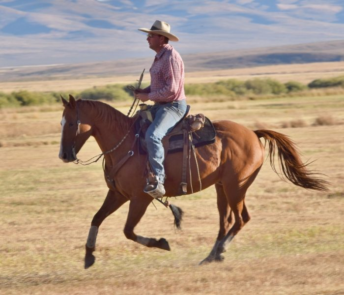 Horse loping