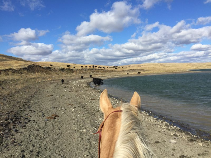 life between these ears, ranch life, cowgirl, horses