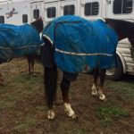 Hauling Horses With Blankets in Cold Conditions