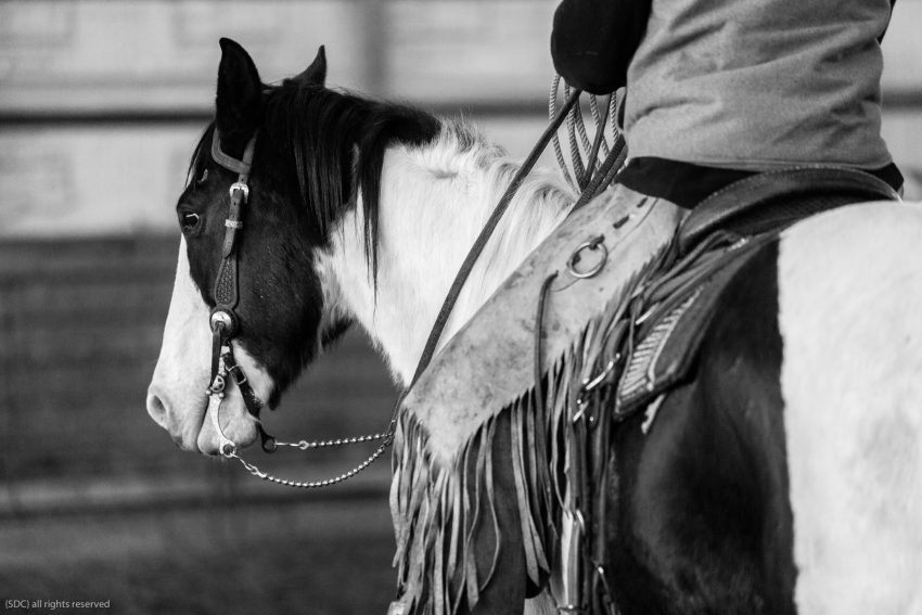 buckaroo roping, ranch roping, big loop roping, roping on the river, south dakota cowgirl photography, paint horse