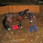 Feet First Horsemanship Ground Work