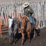Training and working a colt while horseback
