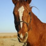 Horses' expressions give clues to state of mind and health