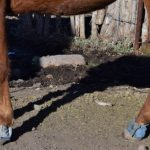Protect your horse from rocks, cactus and other poky things with cheap and easy denim bell boots