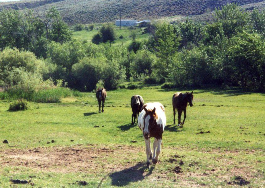 horse care calendar