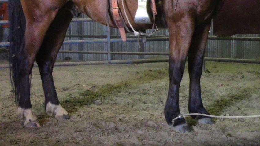 roping horses' feet