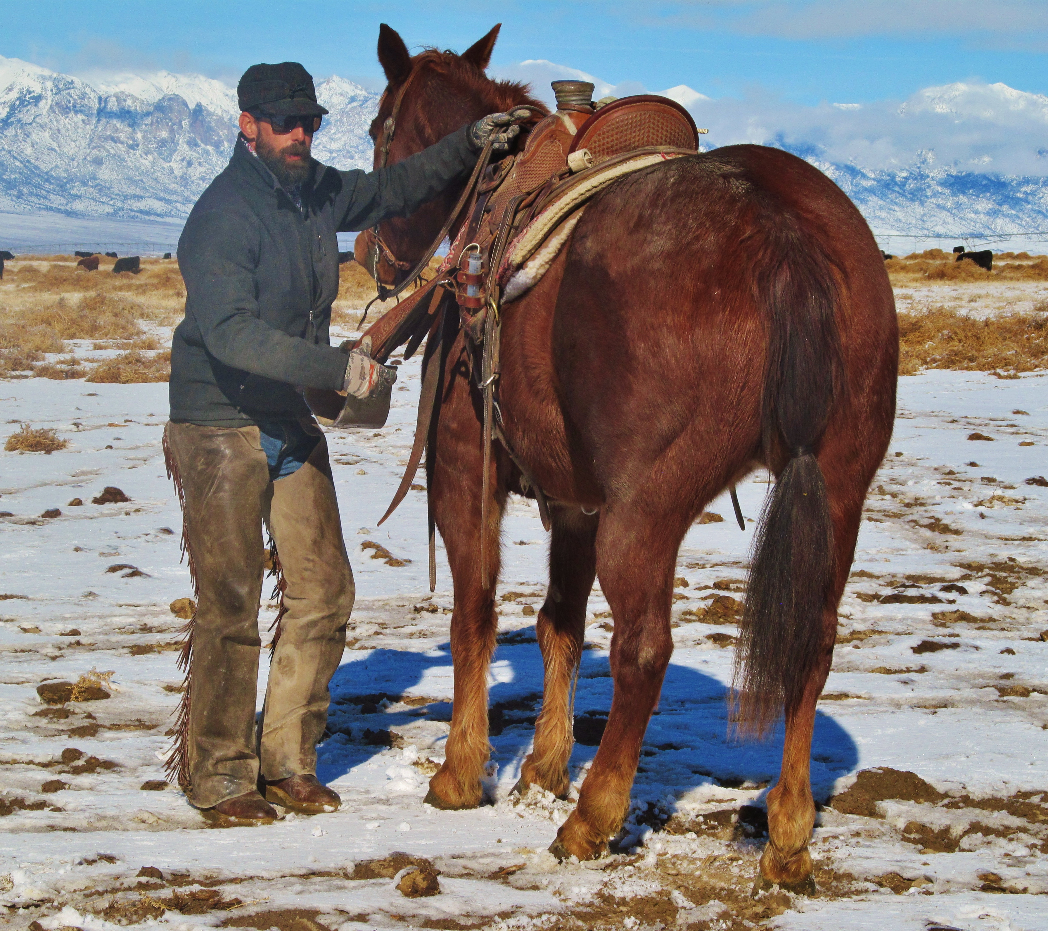 Essential Winter Riding Gear Guide Cavvysavvy Com We Know Working Horses