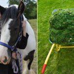 PSA: Don't feed the Horses