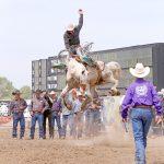 Miles City Bucking Horse Sale Celebrates 68 years