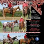 WYO Quarter Horse Sale - Bill & Carole Smith