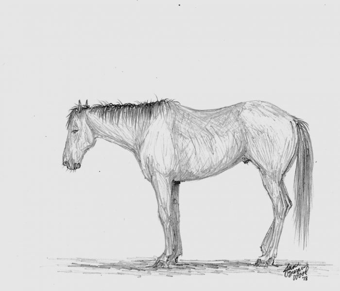 tired horses