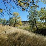 Tree Selfies; Cottonwood Creek Chronicles