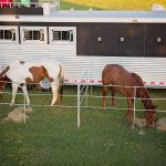 Housing Horses on the Rodeo Road