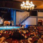 Diamonds In The Desert Horse Sale Recap