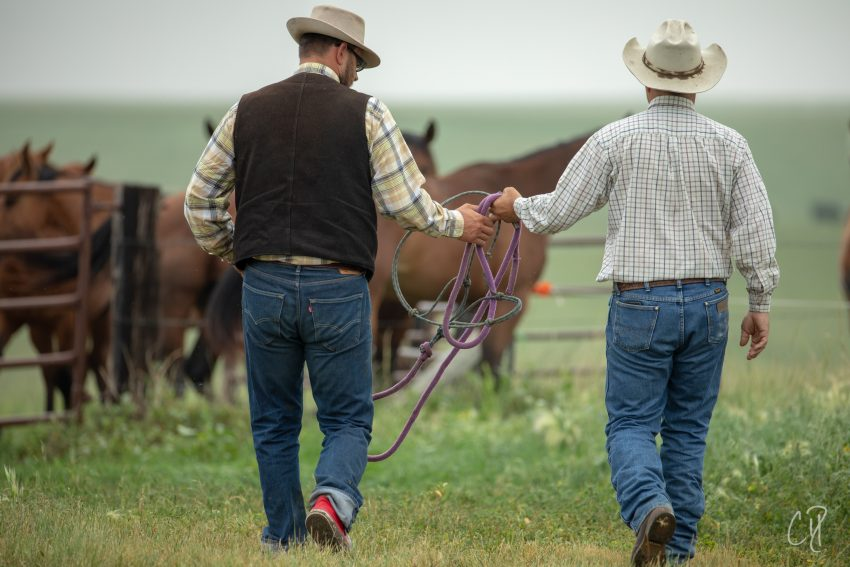 http://thedxranch.com/clinics/applied-lifemanship-a-horsemanship-workshop, chris dickinson photography
