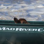 Kottwitz's Calf Canoeing