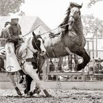 69th Annual Miles City Bucking Horse Sale and Drawing